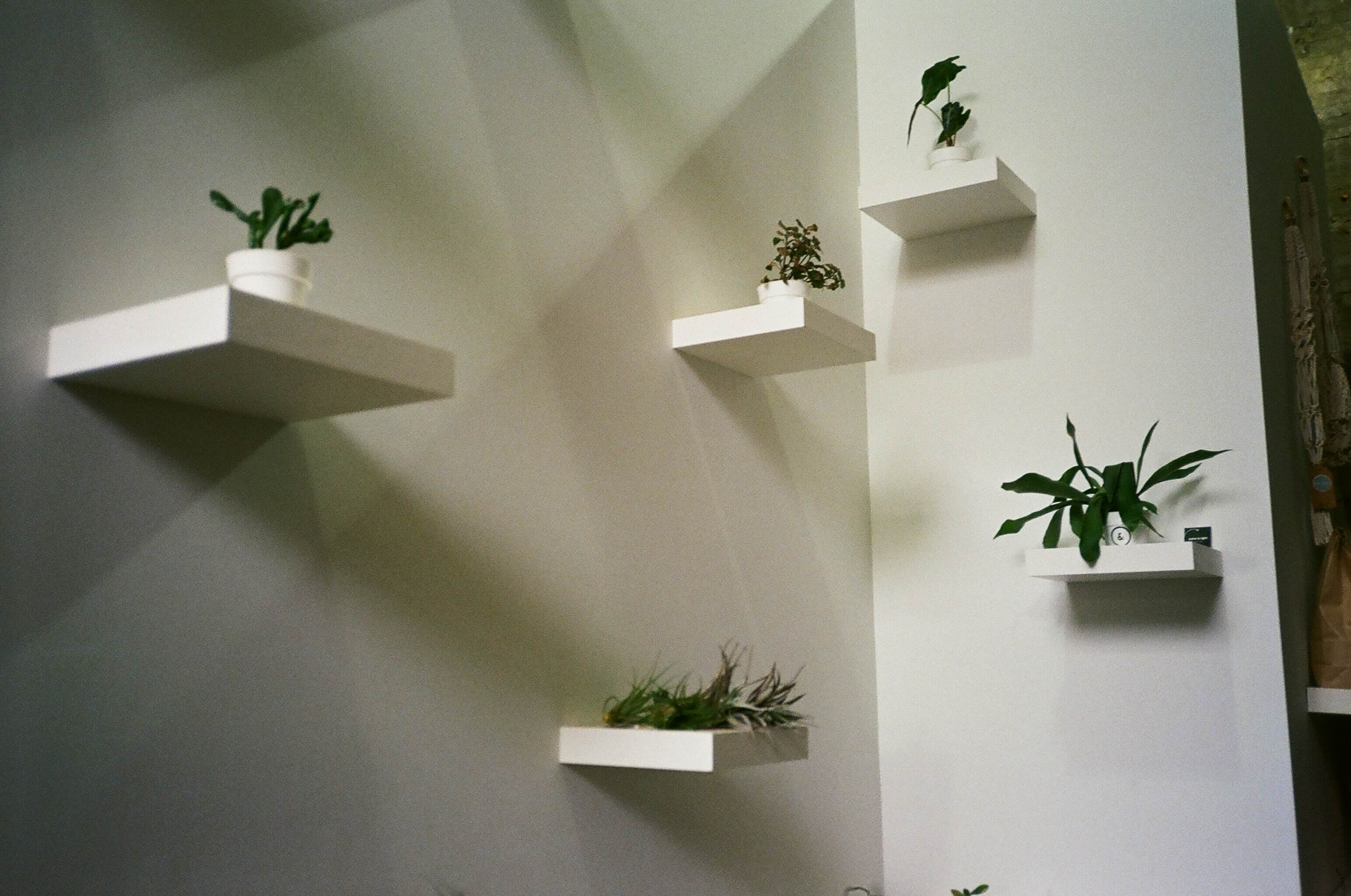 wall and plants