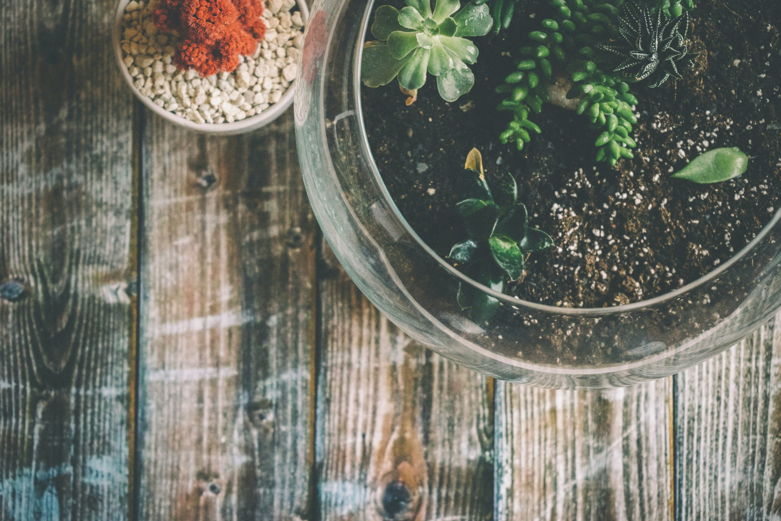 terrarium basics for beginners